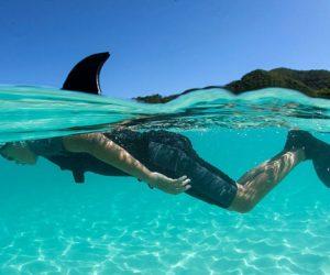 covid 19 shark attack